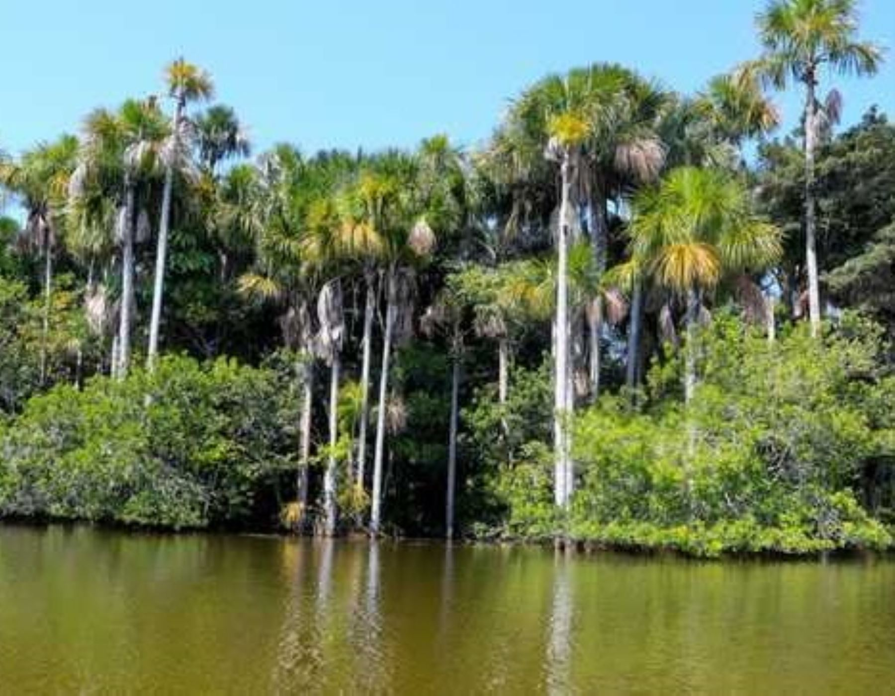 El Minam afirma que la conservación ambiental es clave para asegurar el bienestar de la población. ANDINA/Difusión