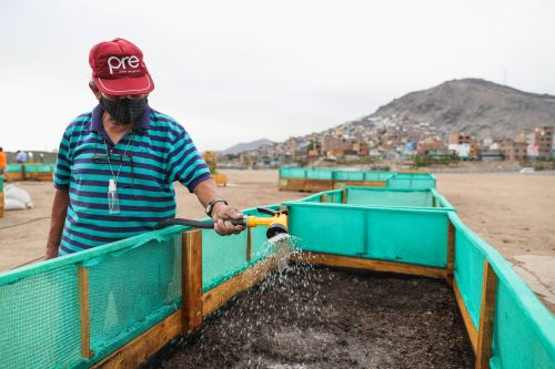 Municipalidad de Lima impulsa Biohuerto comunitario en Jr. Amazonas en el Centro de Lima