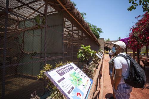 Parque de las Leyendas vuelve a abrir sus puertas con protocolos de bioseguridad