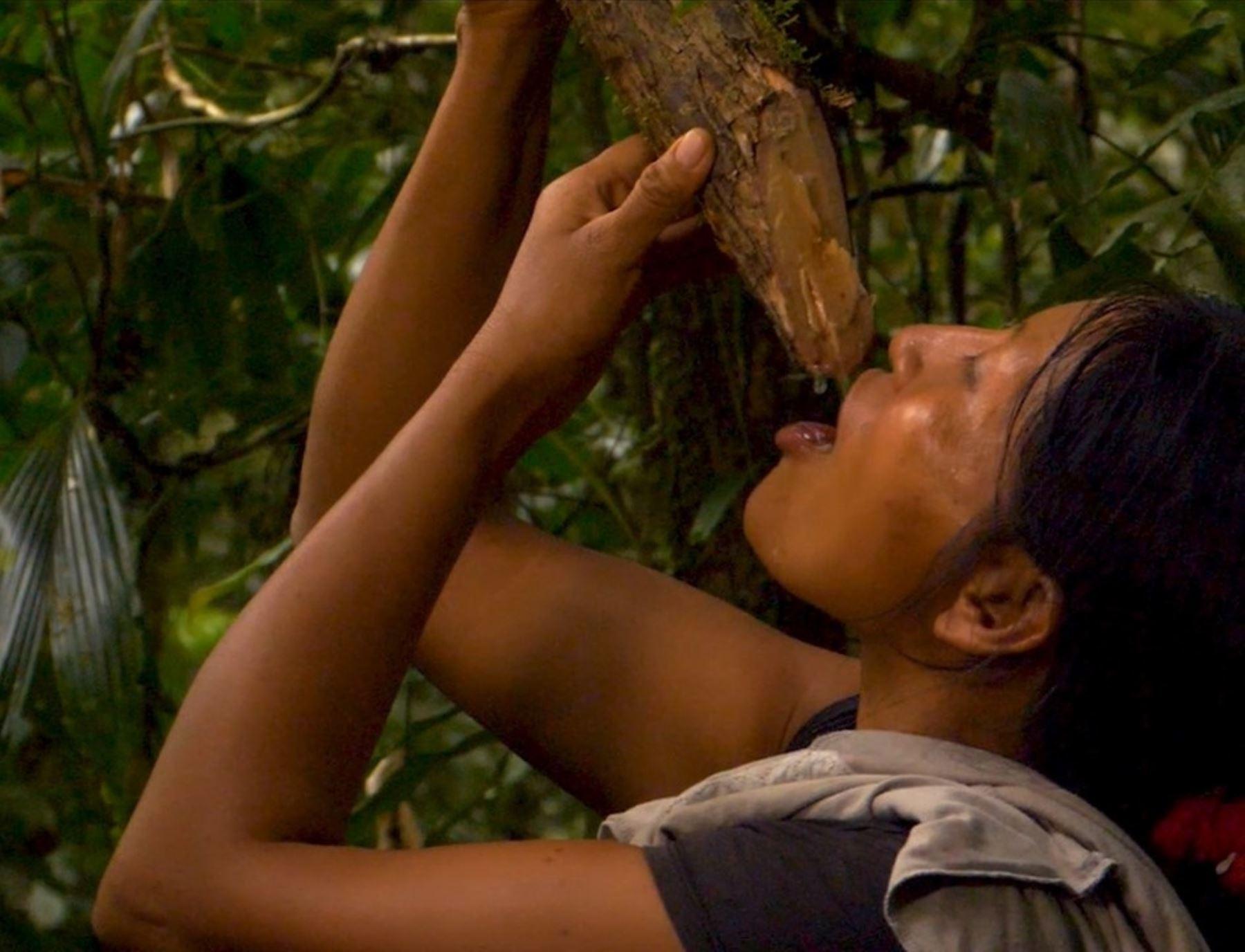 En el Día Mundial de la Vida Silvestre, que se celebrará este miércoles 3 de marzo, se resaltará la importancia de los bosques como sustento de vida de sus habitantes. ANDINA/Difusión
