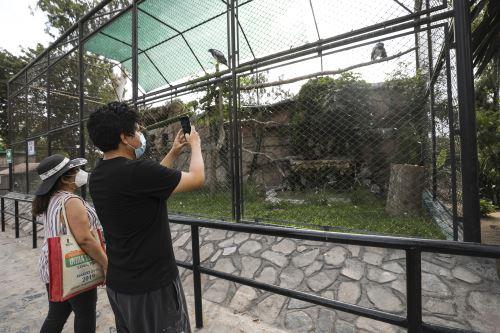 Parque de las Leyendas reabre sus instalaciones tras levantamiento de la cuarentena