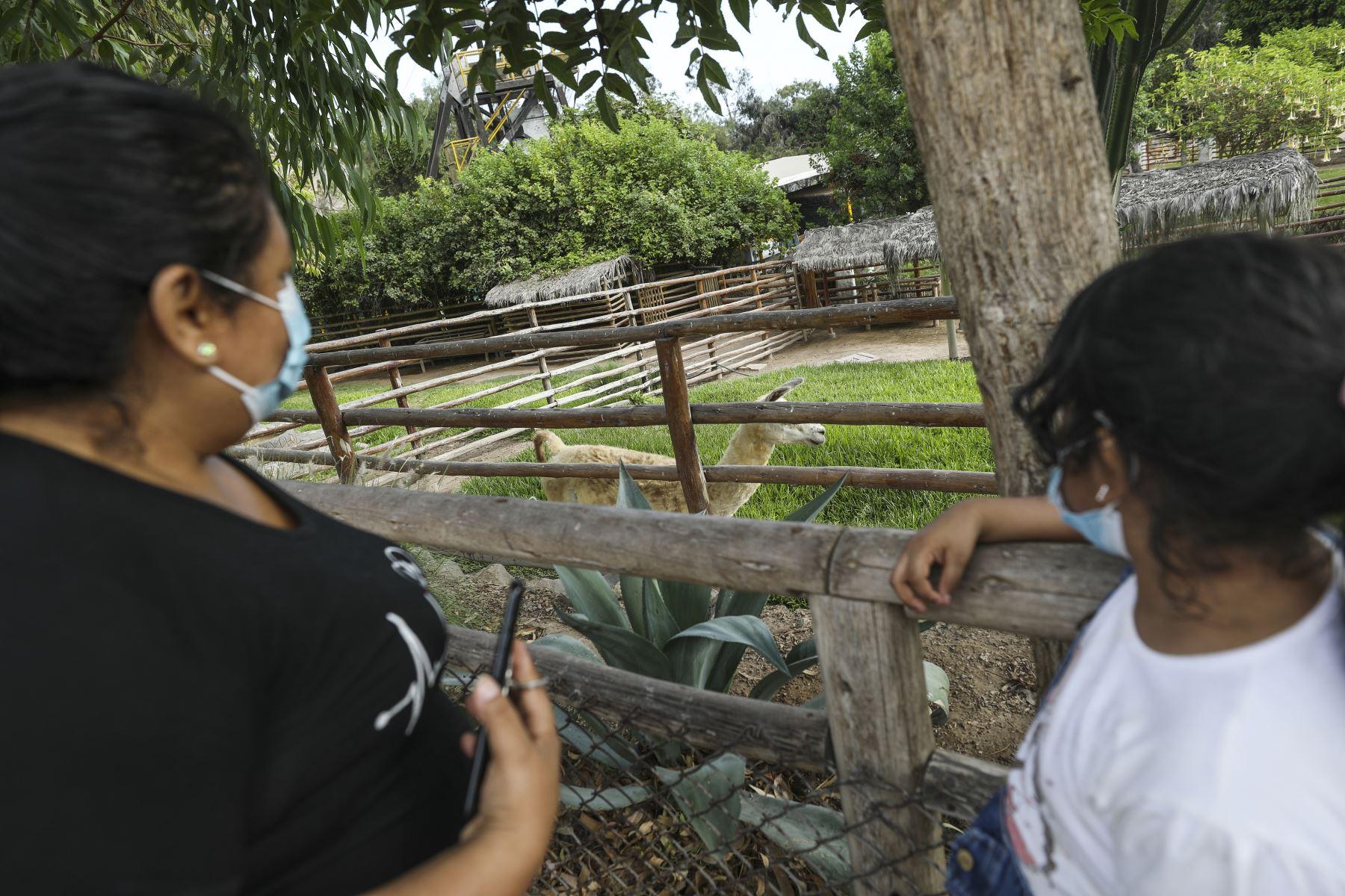 Parque de las Leyendas de Lima reabrió sus instalaciones con un aforo de hasta el 30% de su capacidad tras el levantamiento de la cuarentena. Foto: ANDINA/Municipalidad de Lima