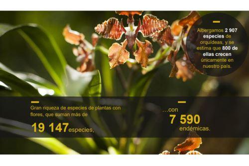 El Perú alberga 2,907 especies de orquídeas, y se estima que 800 de ellas crecen únicamente en el país. Foto: ANDINA/Minam