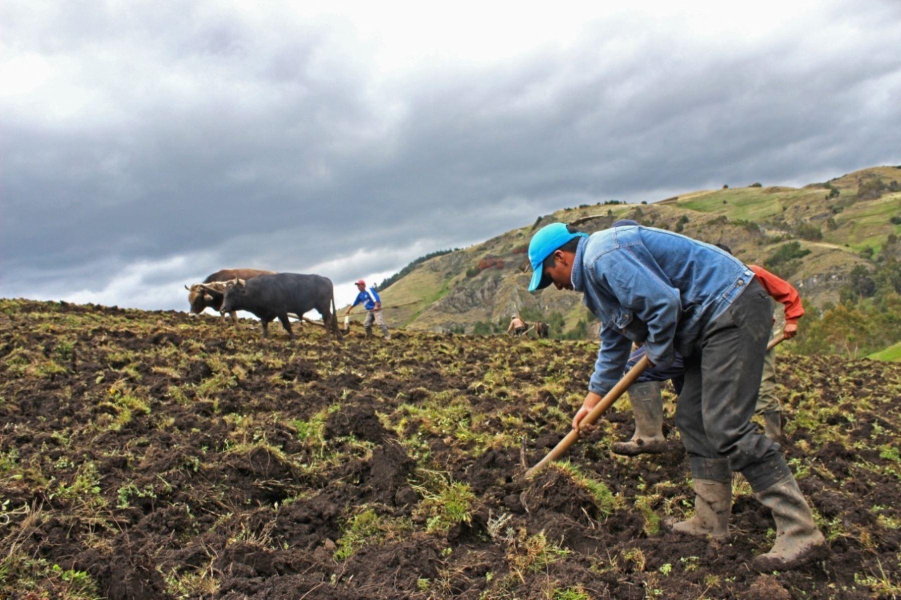La agricultura familiar es eje y base de todo sistema agroalimentario