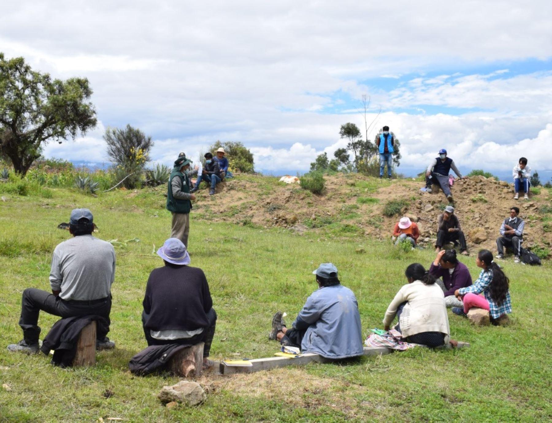 Especialistas del INIA capacitaron a agricultores de Ayacucho en el cuidado del cultivo de maíz para prevenir plagas y enfermedades.