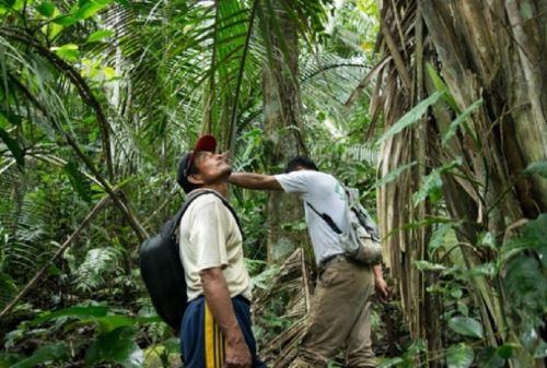 Osinfor y el Gobierno Regional de Loreto unen esfuerzos para involucrar a 80 comunidades en la conservación de bosques. Foto: ANDINA/archivo.