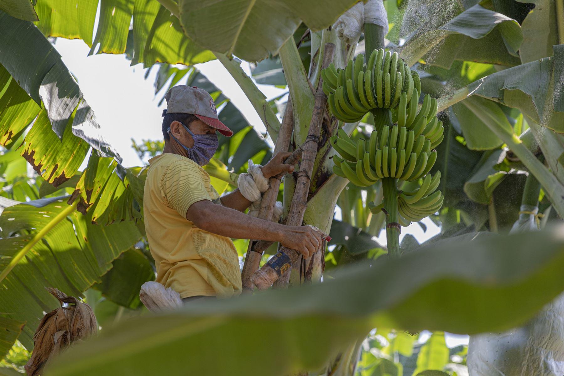 Pequeño productor agrario. Foto: ANDINA/Difusión.