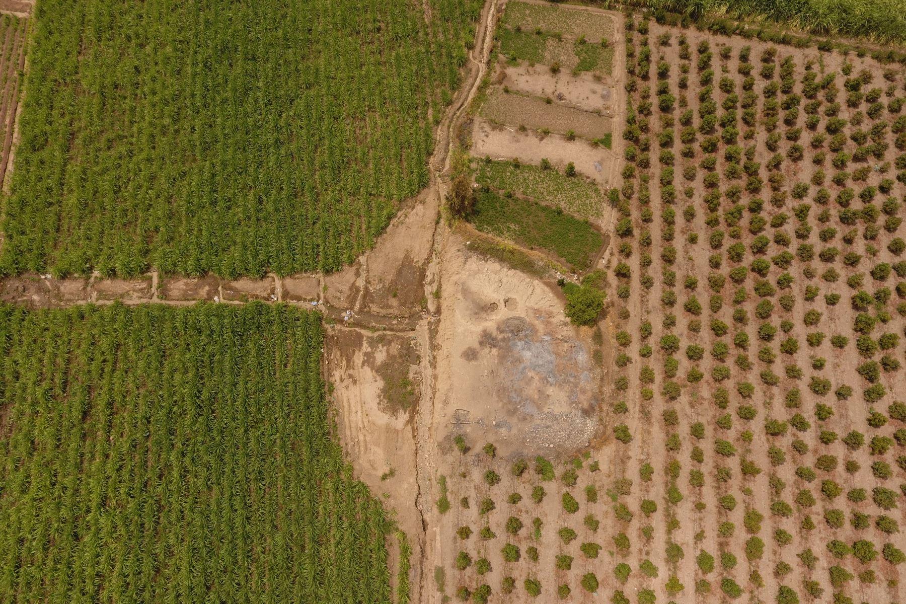 Hallazgo se produjo luego que unas personas destruyeran una huaca para extender campos de cultivo en Virú. Foto: Feren Castilla