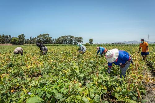Productores agrarios. Foto: ANDINA/Difusión