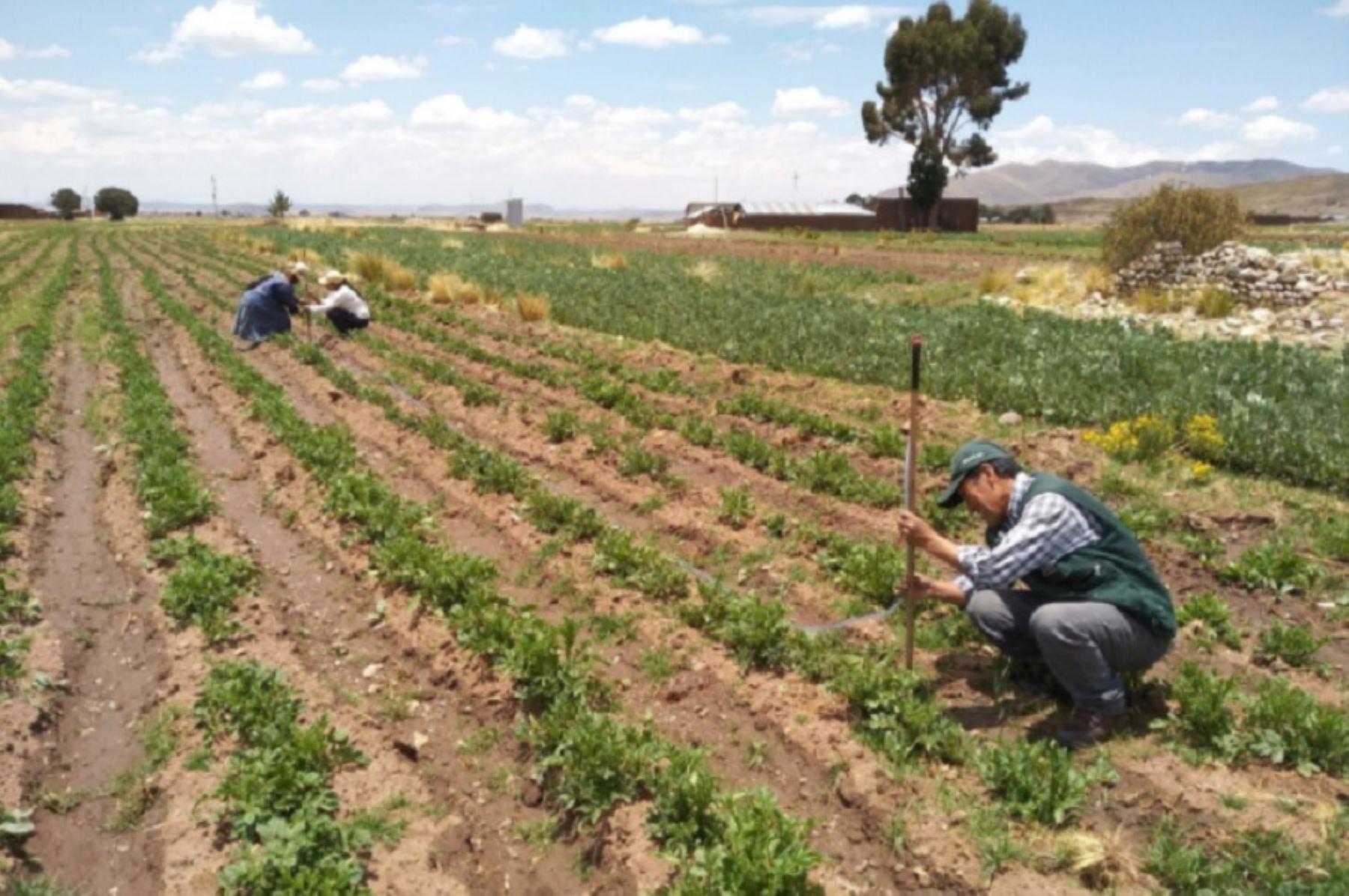 El nuevo Agro Rural, unidad ejecutora del Ministerio de Desarrollo Agrario y Riego (Midagri) fortalece gestión descentralizada y articulada con Comités Regionales Agrarios (CGRAs) a fin de promover más acciones de calidad que beneficien directamente a los productores agropecuarios que practican la agricultura familiar a nivel nacional.