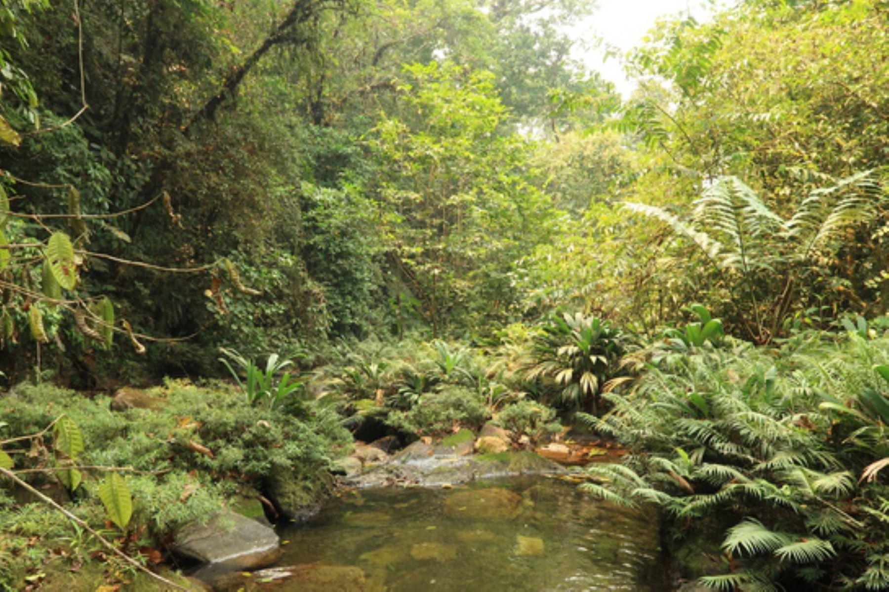 Potsom Posho´II conserva la diversidad de flora y fauna silvestre propia de la ecorregión de bosques húmedos de Ucayali y el ecosistema de bosques de colina baja. Foto: ANDINA/Difusión