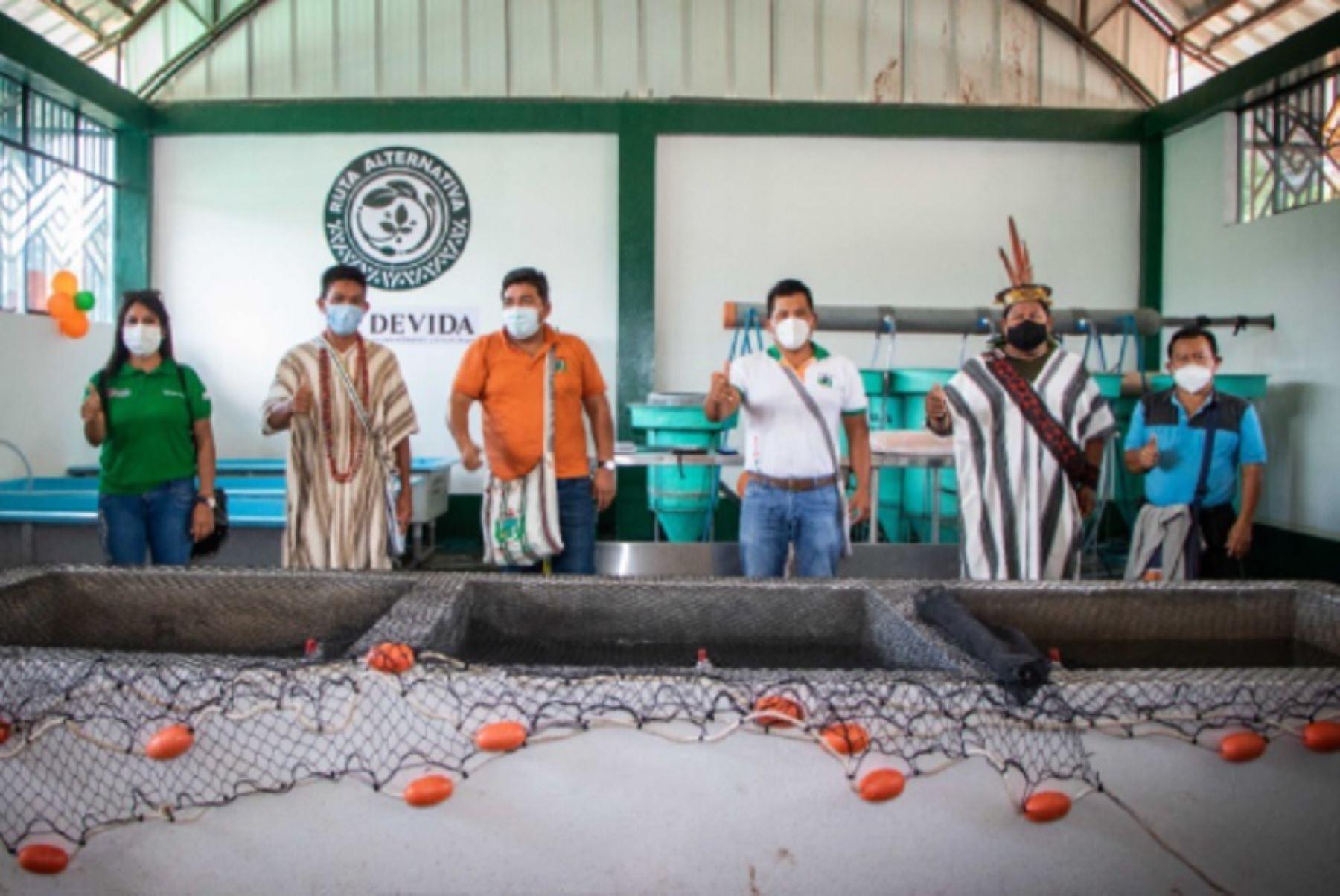 Con el propósito de optimizar la cadena productiva de peces y contribuir con la seguridad alimentaria en el norte del Valle de los Ríos Apurímac, Ene y Mantaro (Vraem), Devida y la Municipalidad Distrital de Río Tambo, en la región Junín, inauguraron un laboratorio de reproducción de peces amazónicos con capacidad de producción de más de 2 millones de alevinos.