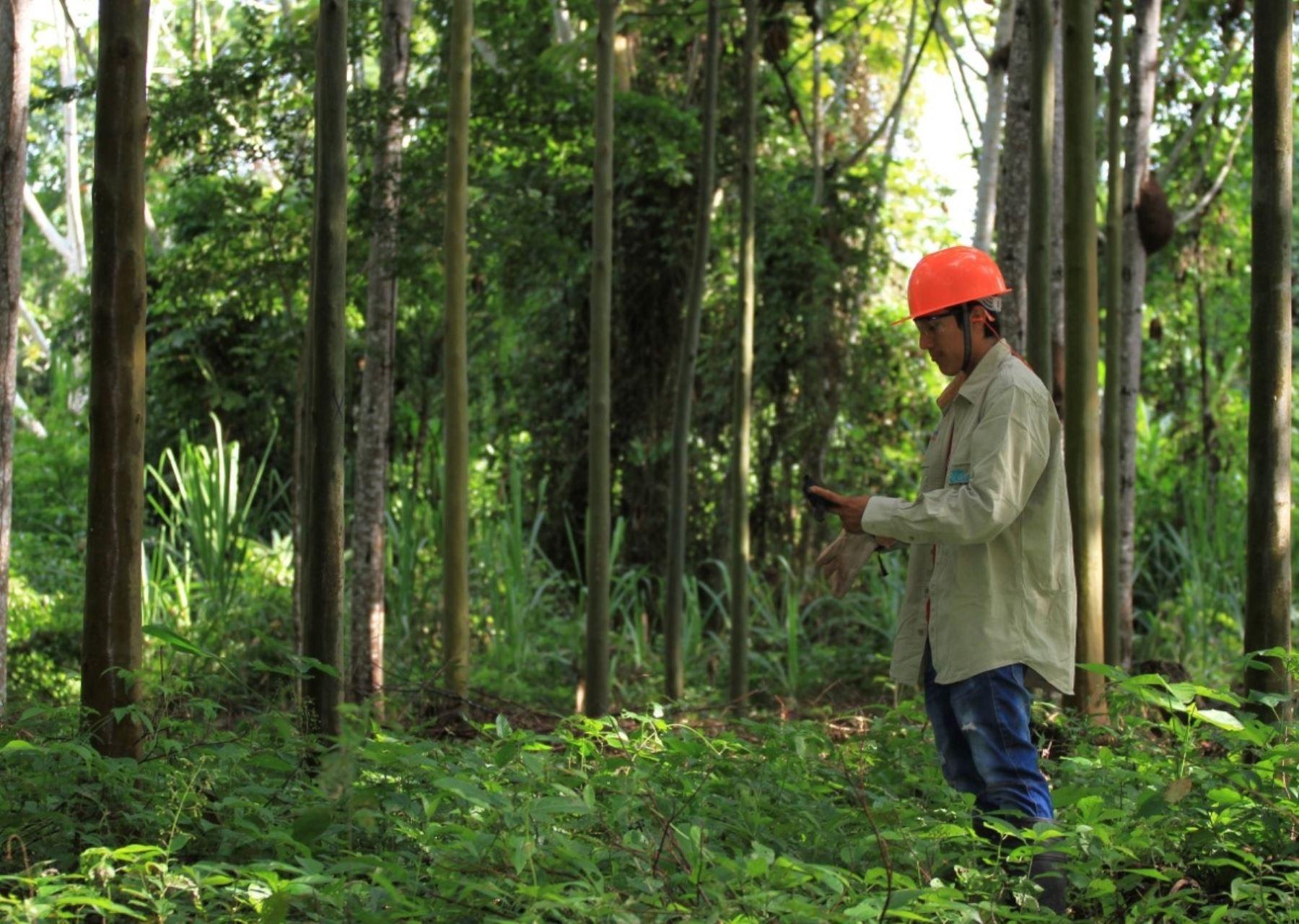 Estandarizan procedimientos administrativos forestales y de fauna para facilitar trámites
