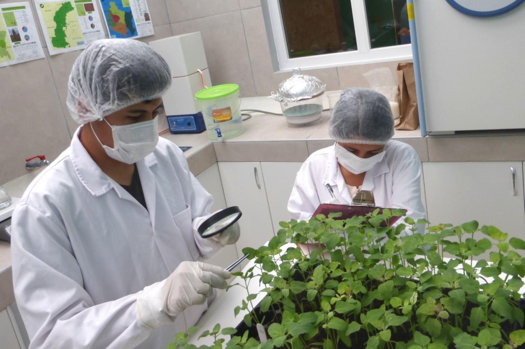 Investigadores peruanos podrán estudiar en la Academia Polaca de Ciencias, una de las instituciones científicas más prestigiosas del país, y del Instituto Internacional de Biología Molecular y Celular de Varsovia.