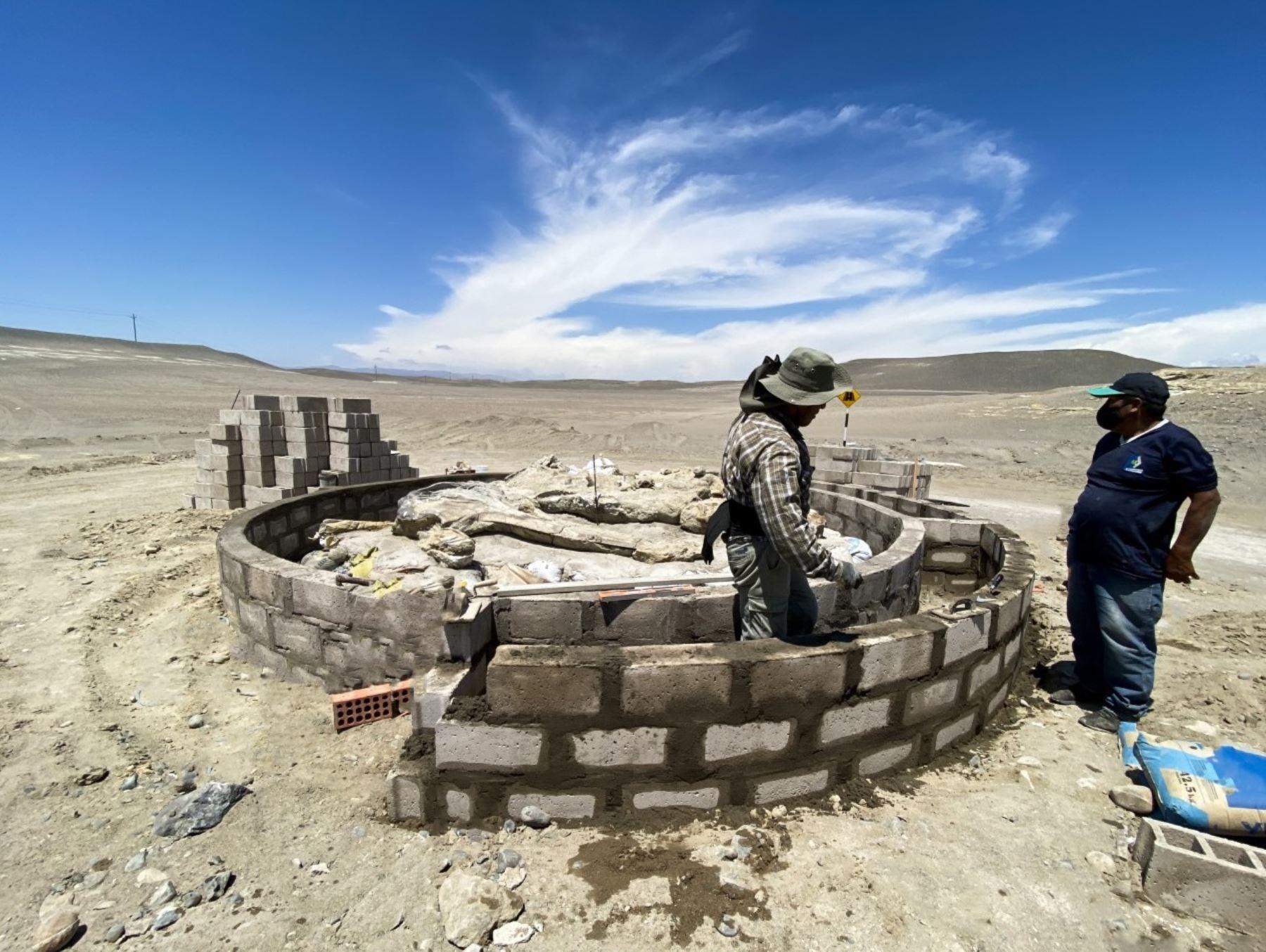 Proyecto científico busca impulsar el turismo paleontológico en la región Arequipa y poner en valor el yacimiento de fósiles de ballenas de Sacaco, ubicado en el distrito de Bella Unión. ANDINA/Difusión