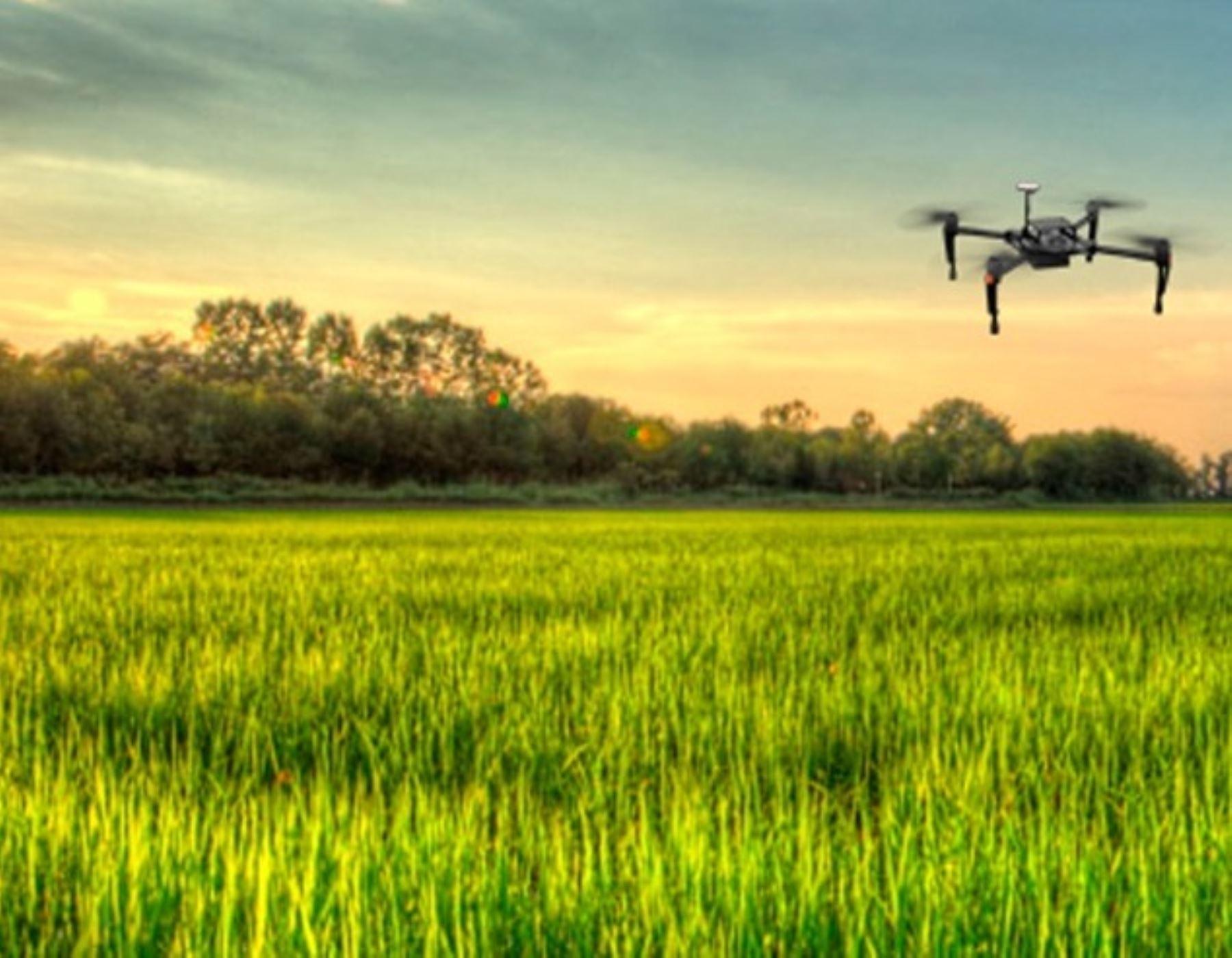 Lambayeque apuesta por la tecnología de punta para impulsan producción agrícola. Un proyecto, que desarrolla la UNALM, propone el uso de drones y satélites para optimizar el cultivo de arrozales. ANDINA/Difusión