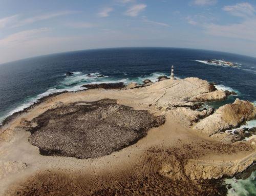 Moquegua reanudó hoy la actividad turística en Punta Coles. El área natural protegida, que ya cuenta con protocolo sanitario, es uno de los destinos de naturaleza más importantes de la región. ANDINA/Difusión