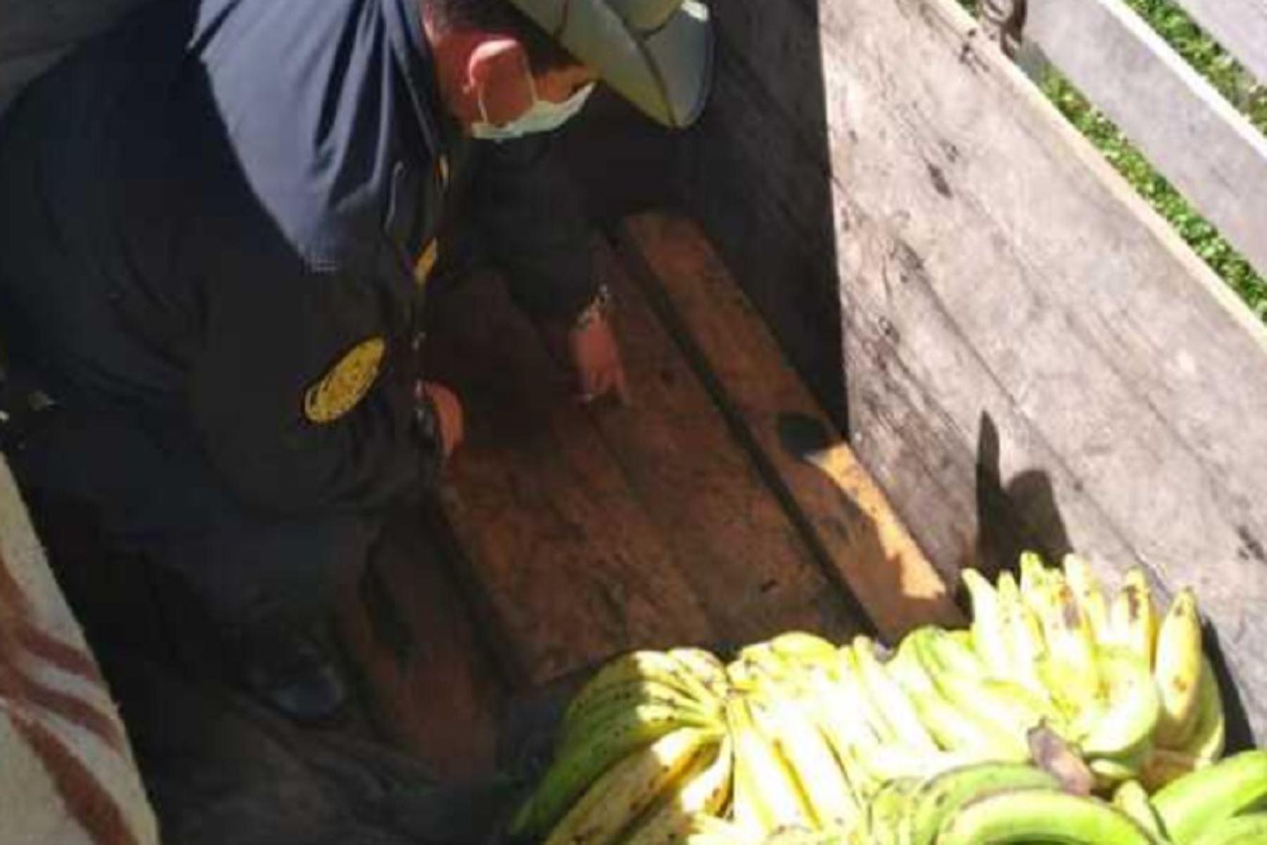 El Ministerio de Desarrollo Agrario y Riego (Midagri), a través del Servicio Nacional Forestal y de Fauna Silvestre (Serfor) decomisó 3,796 pies tablares de madera aserrada que iba camuflada con plátanos provenientes de la provincia del Manu, en el departamento de Madre de Dios. Foto: Midagri/Serfor.