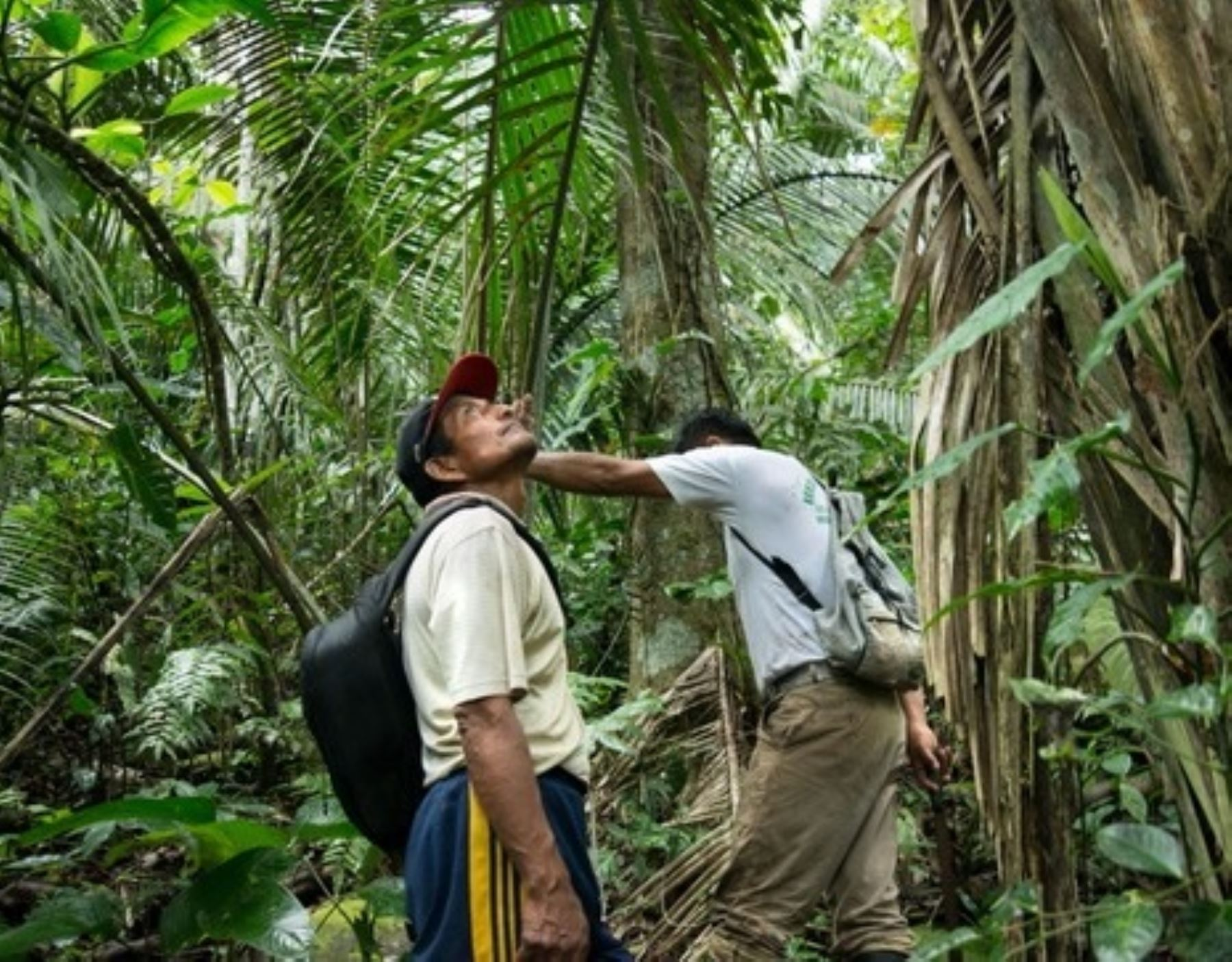 El Ministerio del Ambiente resaltó el mecanismo aprobado por el Gobierno que garantiza los derechos de los defensores ambientales. ANDINA/Difusión