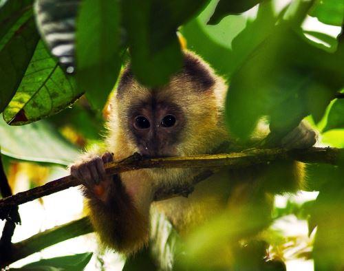 Sernanp y la empresa TGP unen esfuerzos para elaborar un plan para preservar la biodiversidad de la selva de Cusco ANDINA/Difusión