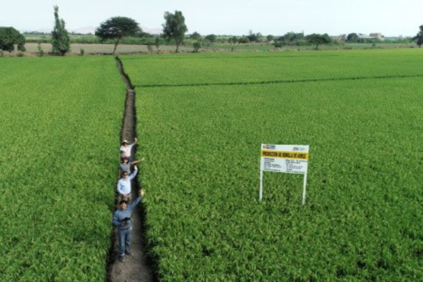 Cultivos de arroz.