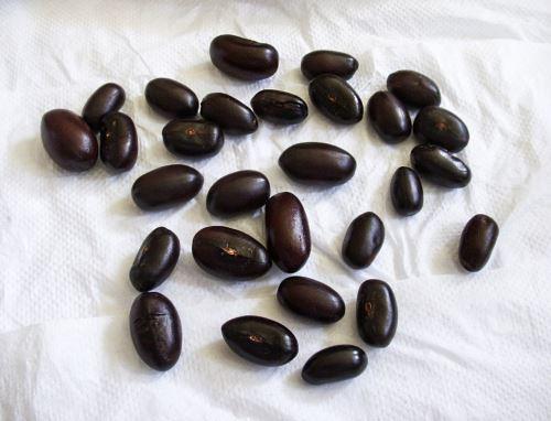 Científicos de la Universidad Nacional Mayor de San Marcos estudian beneficios de la semilla del pajuro, un árbol que crece en la sierra norte, para la prevención del síndrome metabólico. ANDINA/Difusión