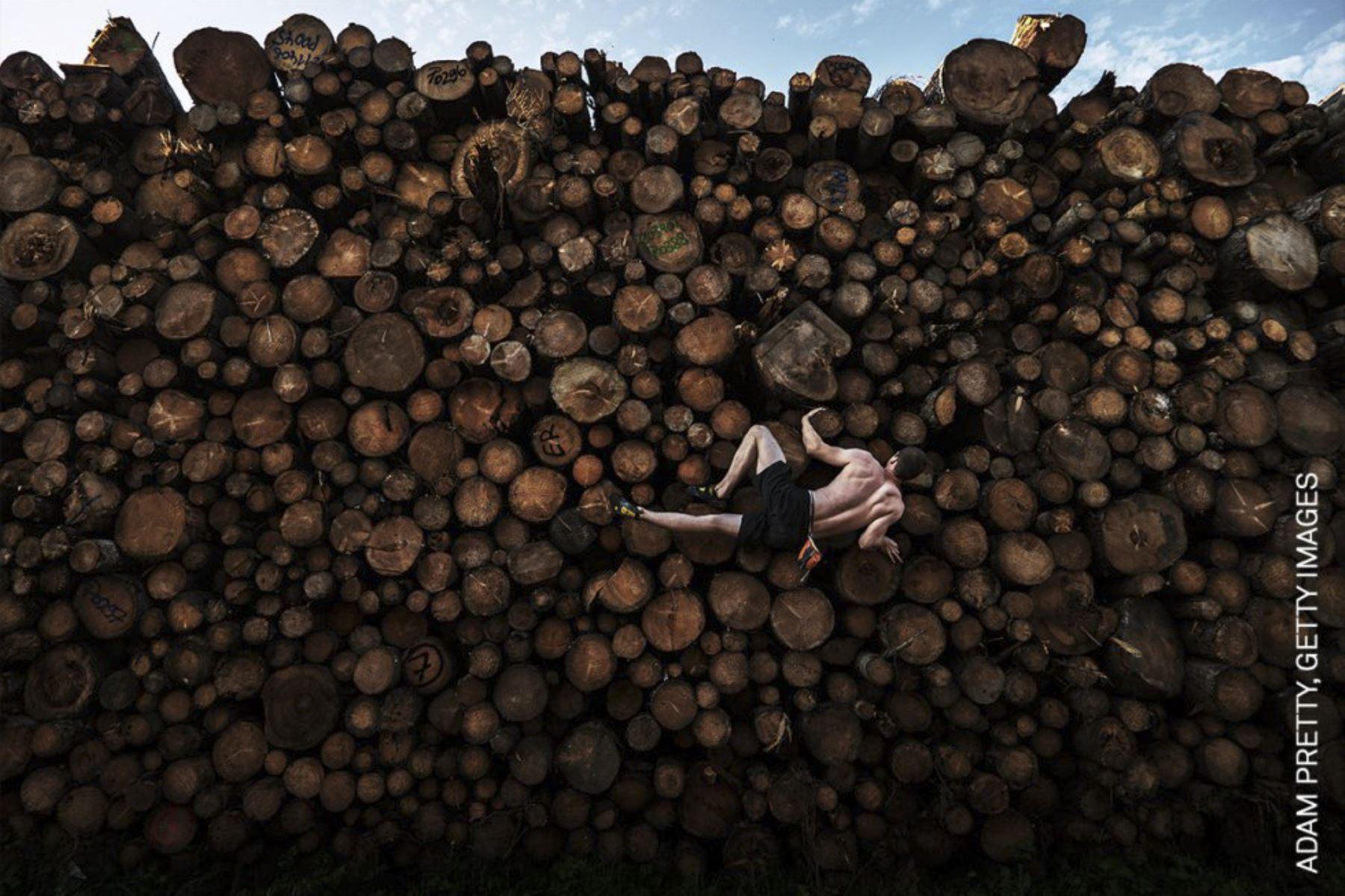 Deporte, individual: Escalador de troncos. Foto: Adam Pretty