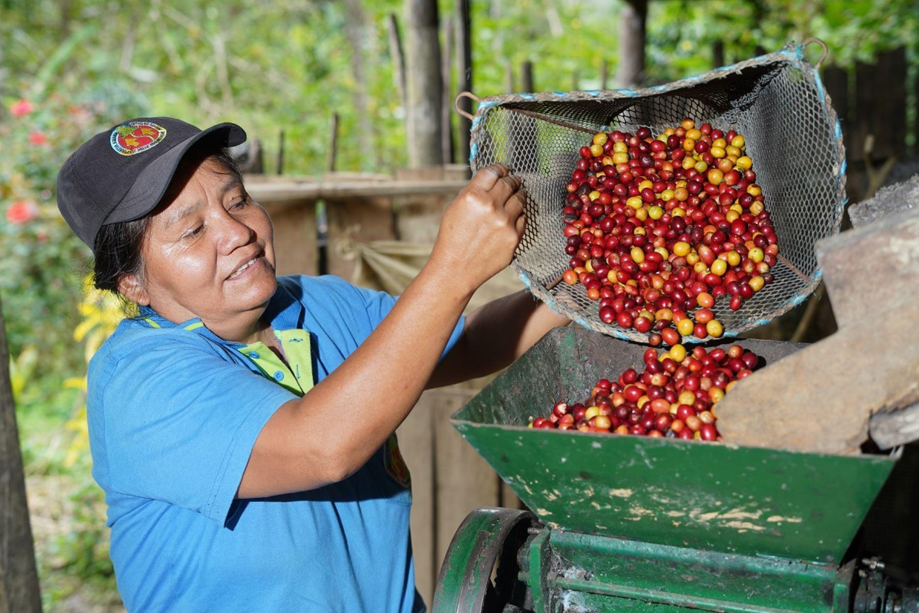 Productora de café del centro del país. Foto: Cortesía