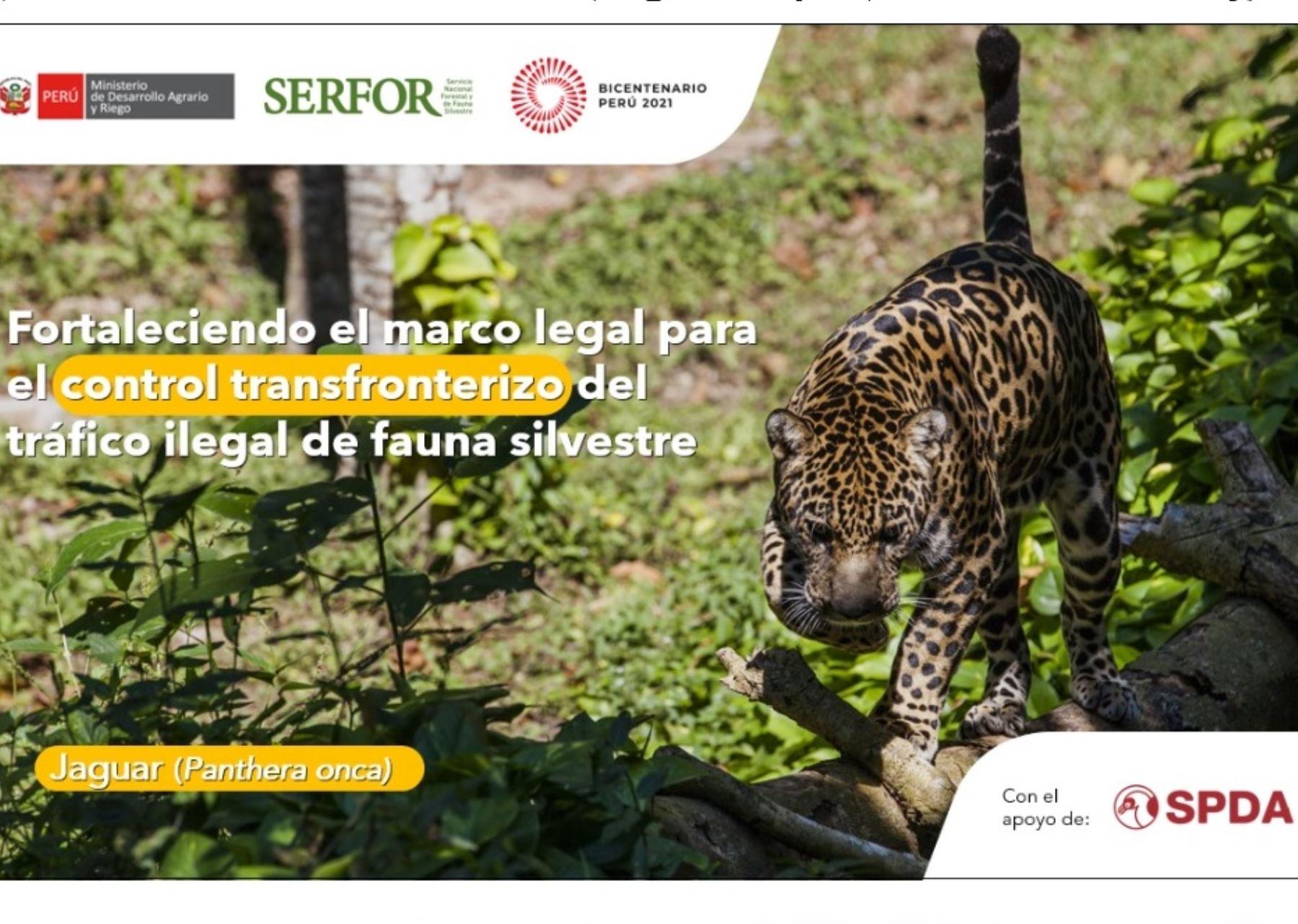 Serfor y el gobierno británico unen esfuerzos para mejorar el control fronterizo y combatir el tráfico de fauna silvestre con el apoyo de los gobiernos regionales y locales.
