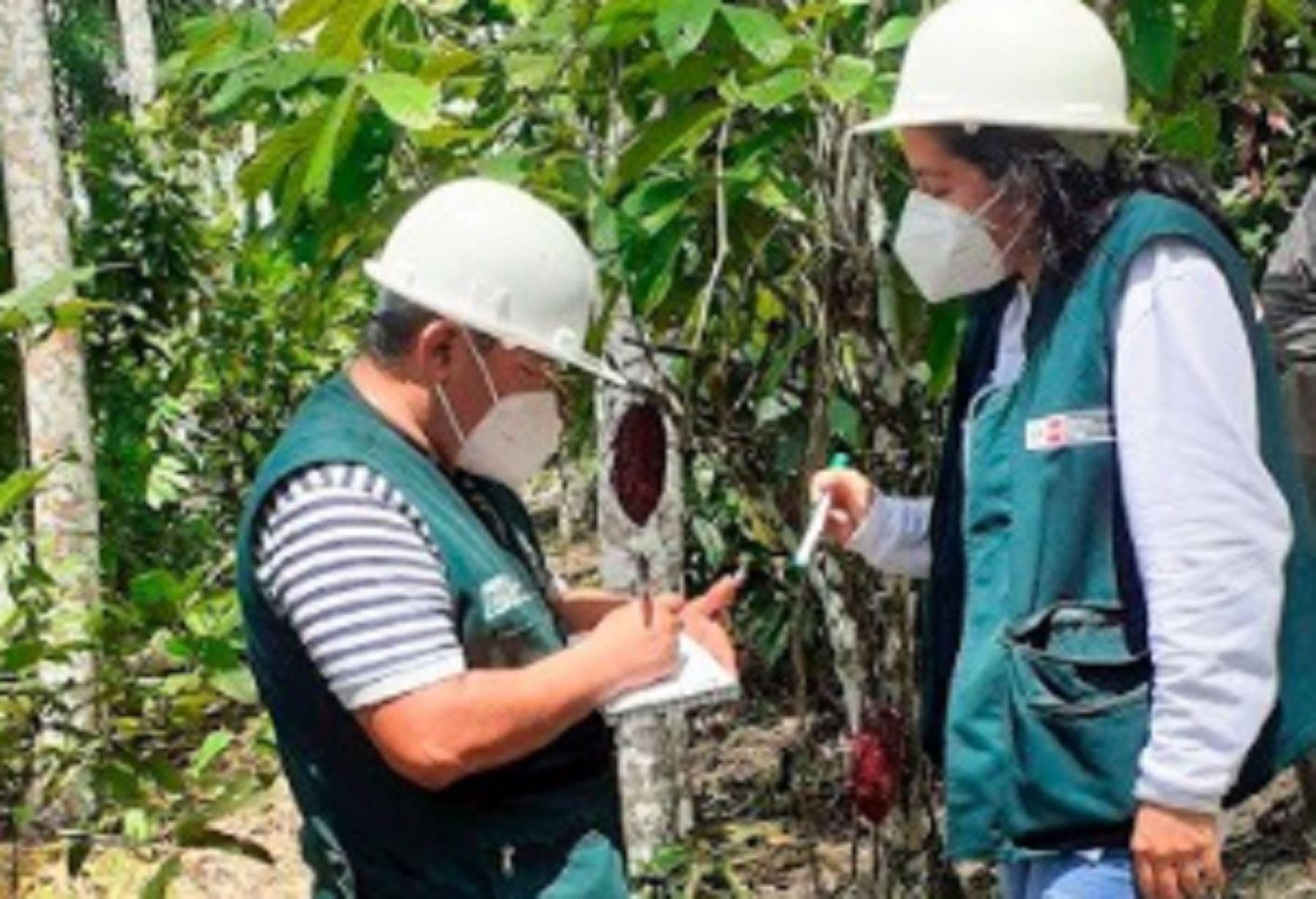 """El proyecto de investigación """"Maderas 3"""", emplea la silvicultura para promover un manejo sostenible en estas zonas forestales, así como proponer alternativas para la recuperación y rehabilitación de estas áreas dañadas a través de plantaciones forestales y agroforestales, entre otras."""