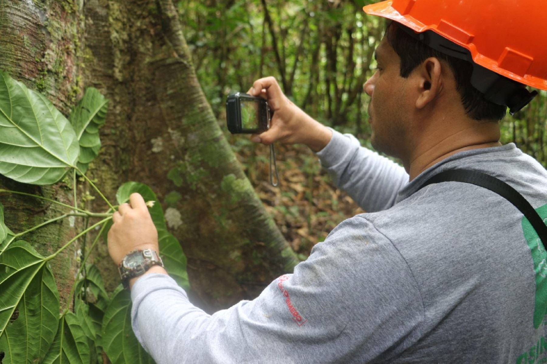 OSINFOR y Pro-Bosques contribuyen al valor de madera en beneficio de Comunidades Nativas. Foto: Difusión