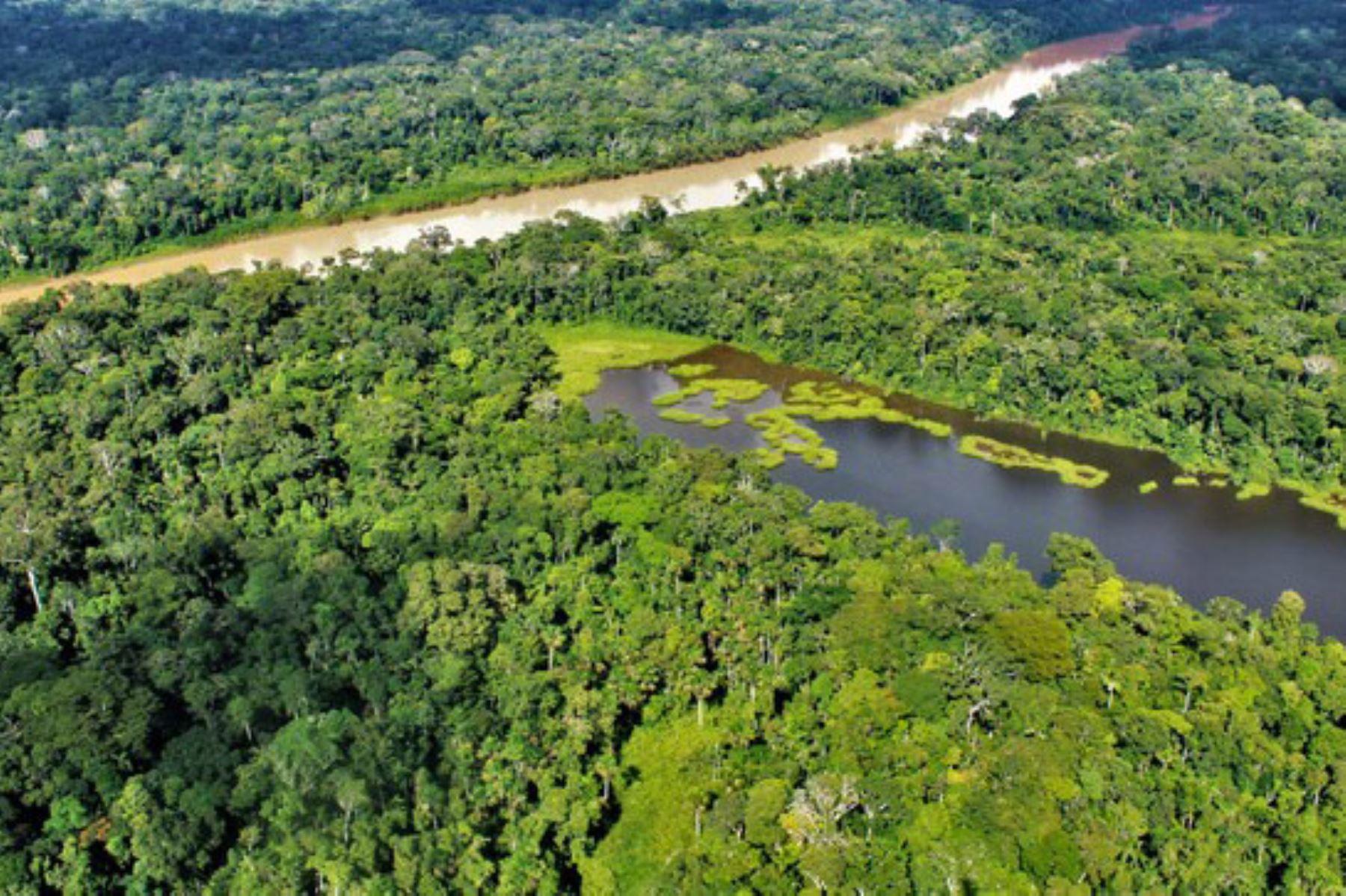 La ejecución de los proyectos Somos Bosques forma parte de la nueva estrategia de intervención del Programa Bosques al 2030. Foto: ANDINA/Minam