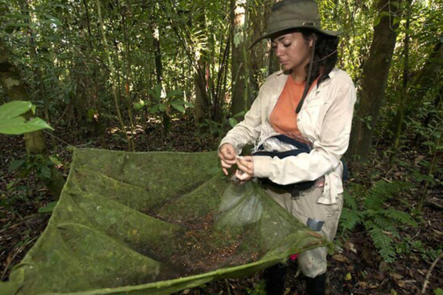 La propuesta normativa busca establecer la profesionalización del trabajo que desempeñan los guardaparques, guardaislas y agentes de protección de los pueblos indígenas.