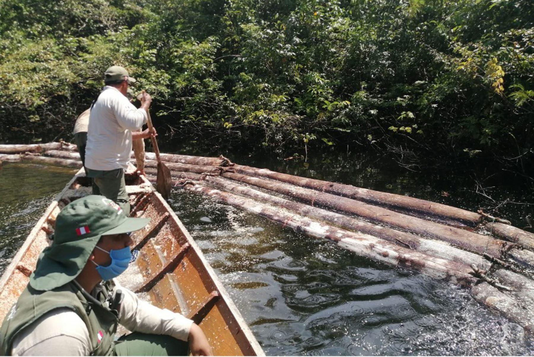 En el lugar se hallaron 60 trozas, equivalentes a 2,797 pies tablares, de la especie maderable cumala.