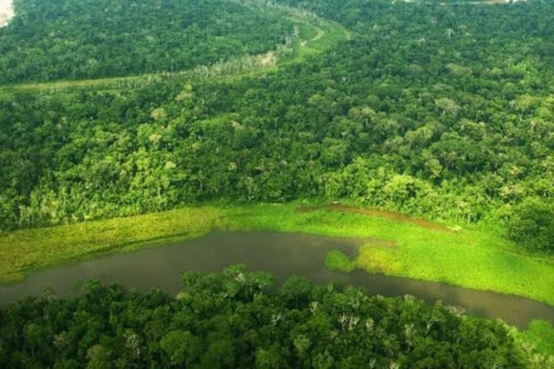 Servicio de monitoreo de bosques del Programa Bosques facilita la participación ciudadana en la lucha contra la deforestación. ANDINA/Difusión