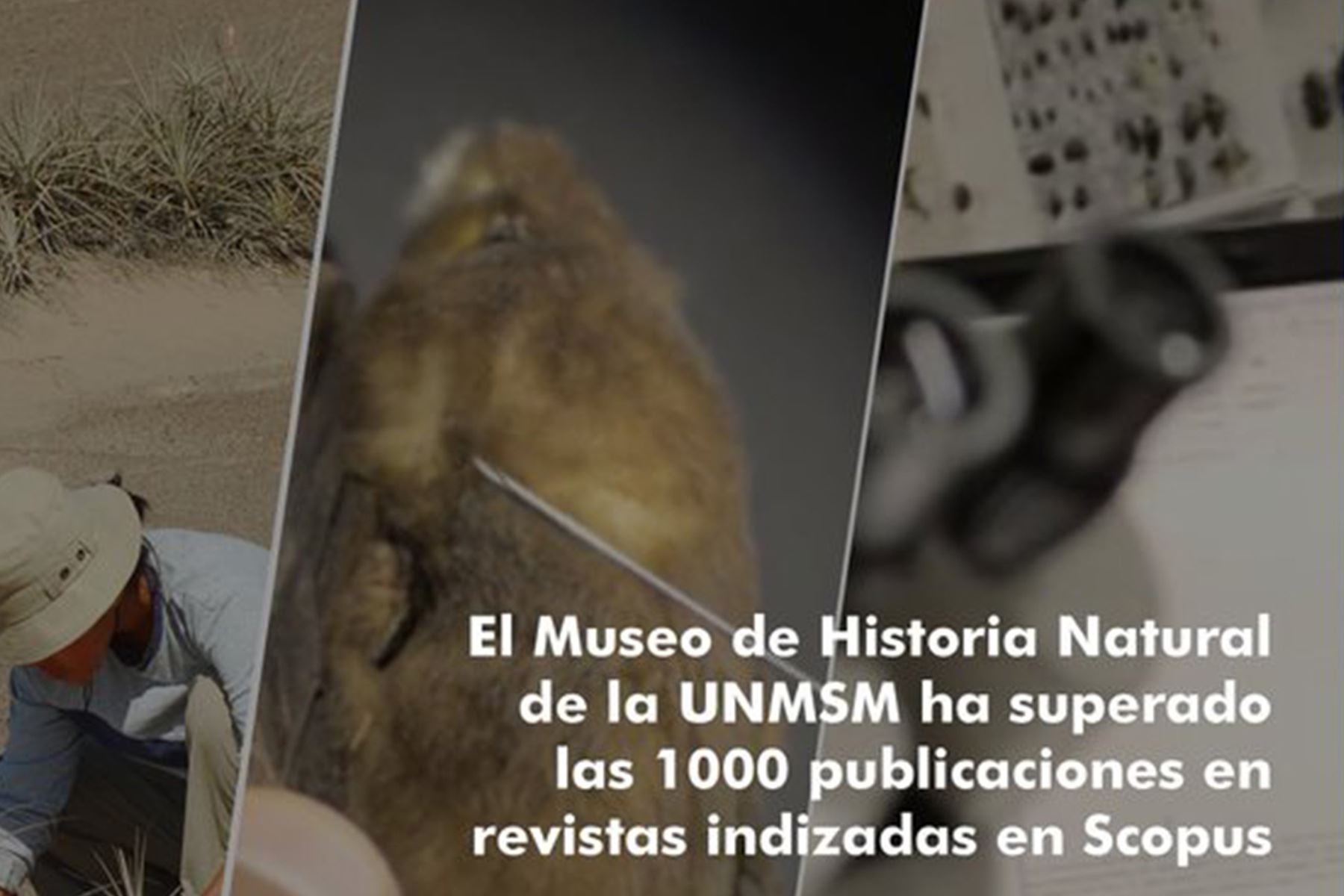 Un total de 1068 publicaciones científicas provienen del Museo de Historia Natural que representan el 18.2% del total de la universidad.