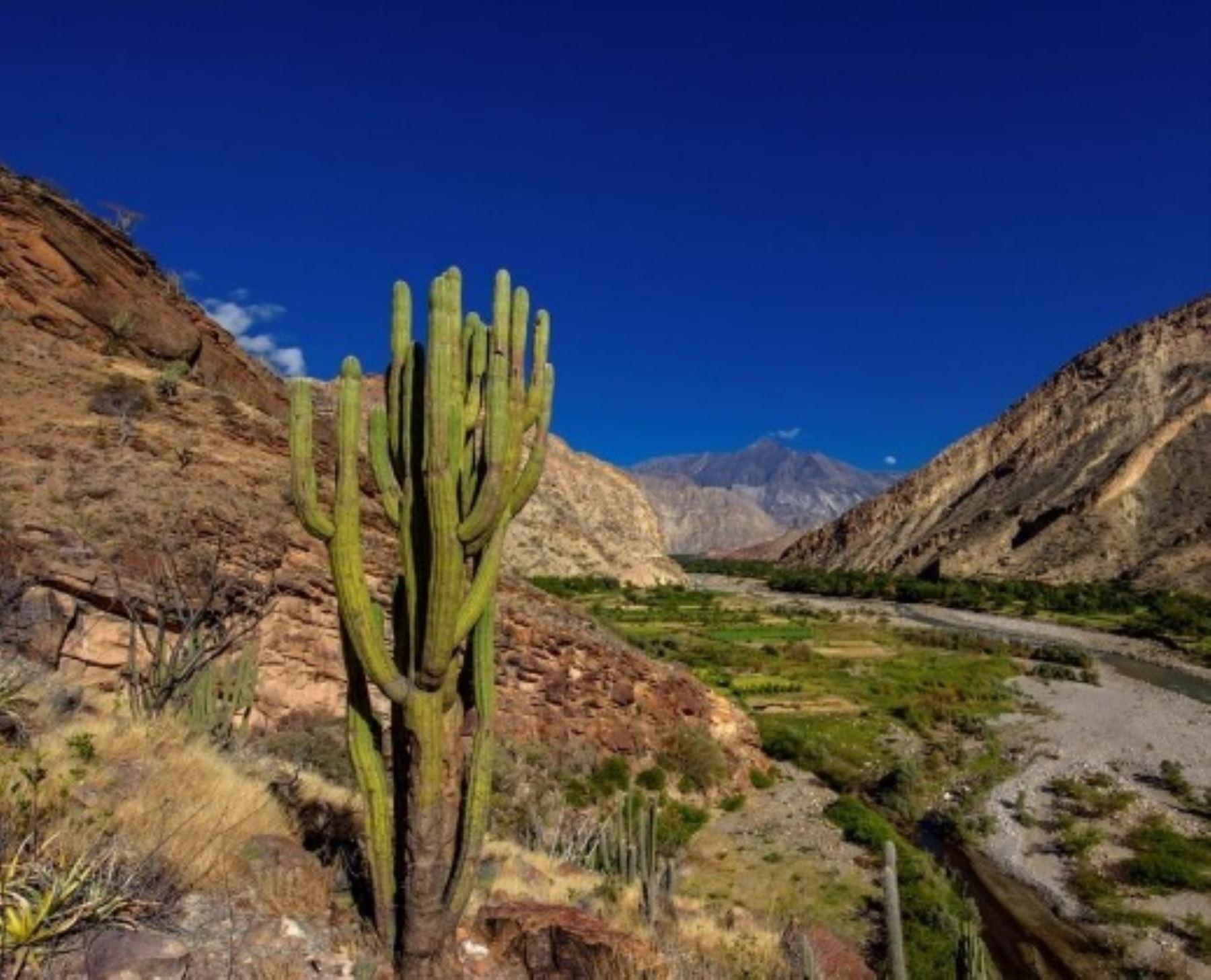 Los Bosques Secos del Marañón, es la tercera área de conservación regional de Cajamarca reconocida oficialmente por el Ministerio del Ambiente.