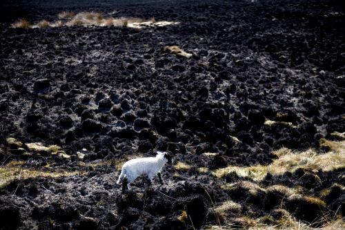 Según Naciones Unidas, las emisiones deberían disminuir en cerca del 8 % anual para no superar el aumento global de 1.5 °C previsto en el acuerdo de París. Foto: AFP.