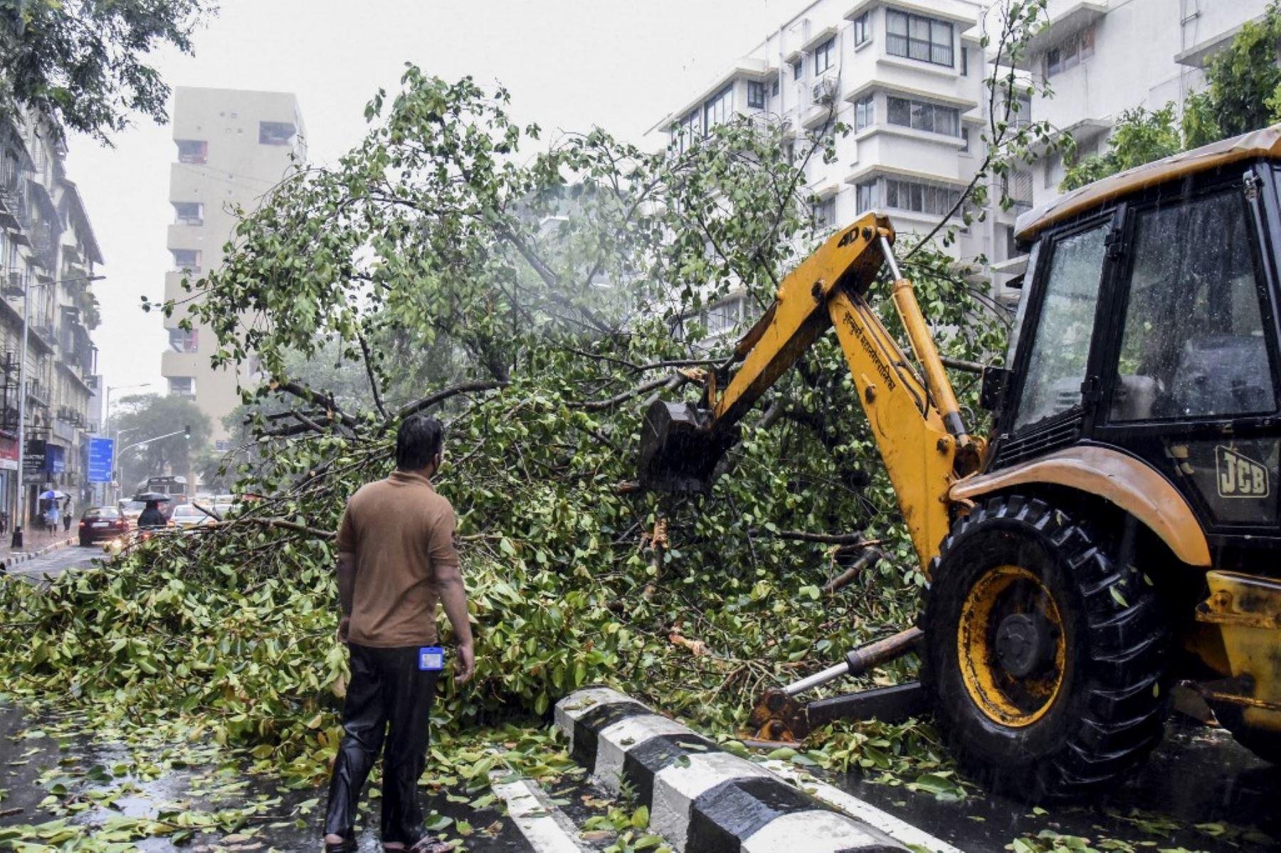 Trabajadores de la Corporación Municipal de Brihanmumbai (BMC) retiran un árbol caído de una calle tras las fuertes lluvias del ciclón Tauktae, en Mumbai el 17 de mayo de 2021. Foto: AFP