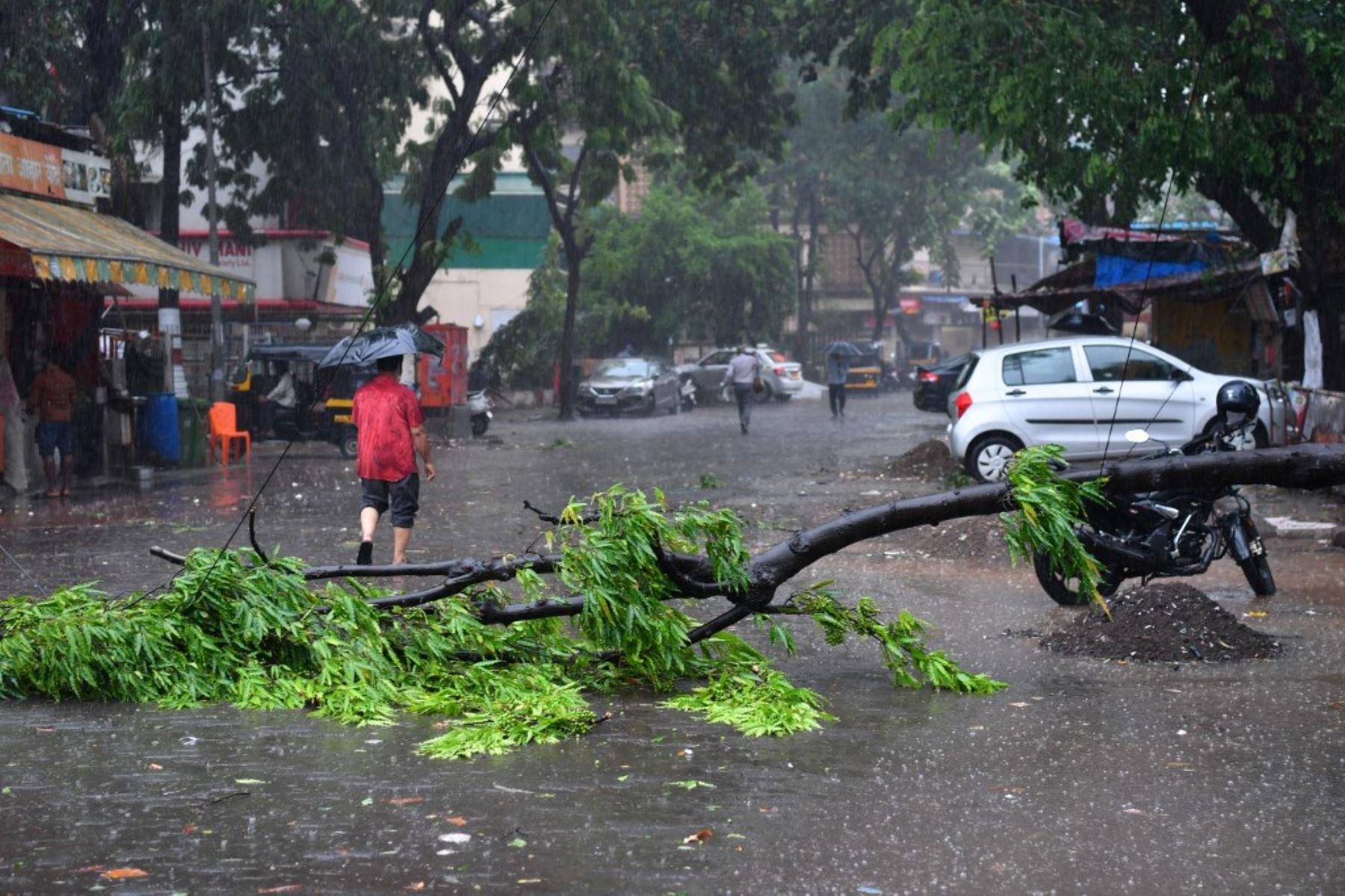 Un hombre pasa junto a un árbol caído en una calle después de las fuertes lluvias del ciclón Tauktae en Mumbai el 17 de mayo de 2021. Foto: AFP