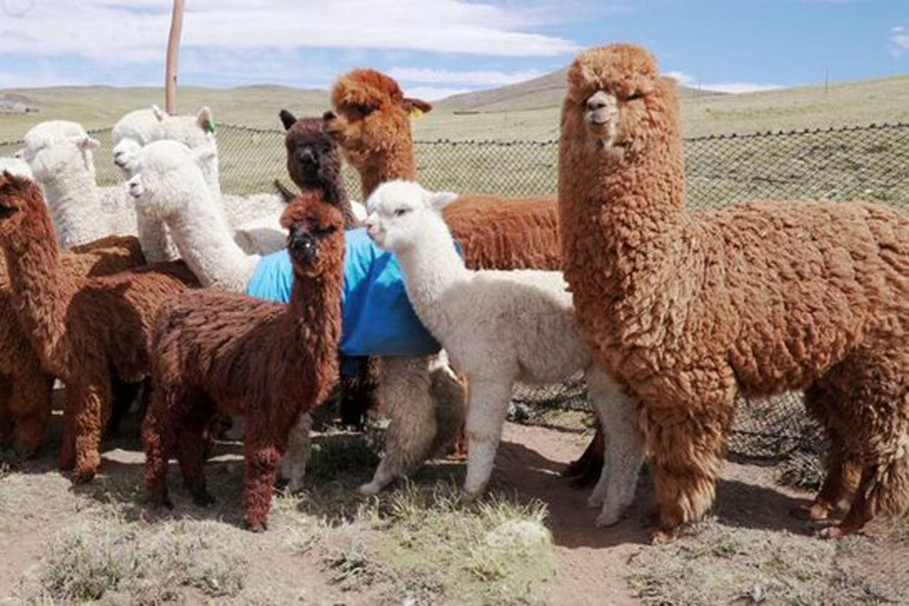 Aprueban Reglamento Interno de la Comisión Nacional de la Alpaca