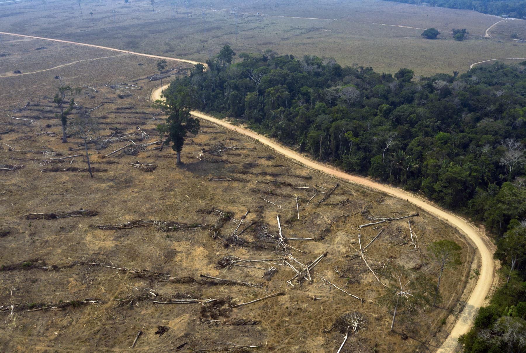 Desde que Bolsonaro asumió el poder en 2019 se ha registrado un repunte de la deforestación en la mayor selva tropical de mundo. Foto: AFP