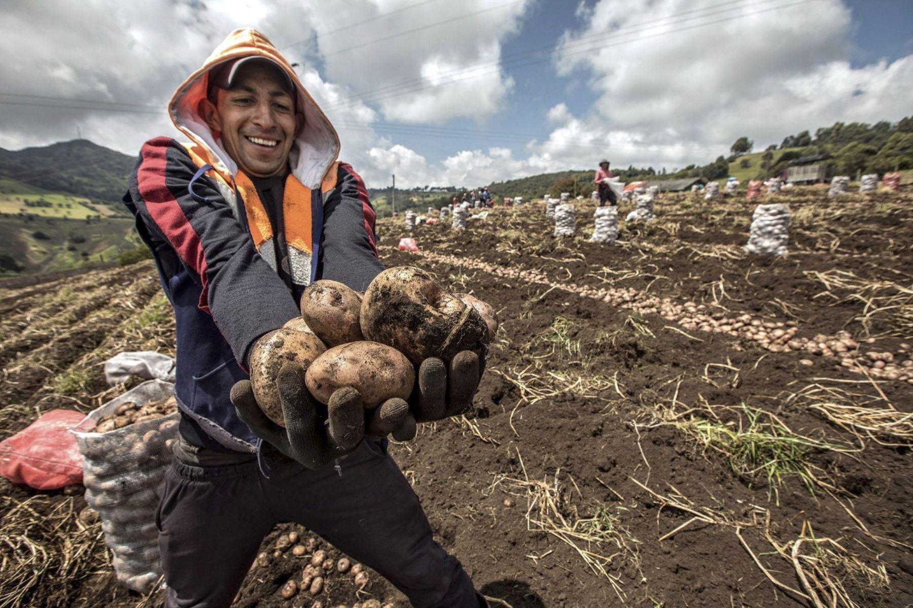 Agricultor. Foto: ANDINA/Difusión.