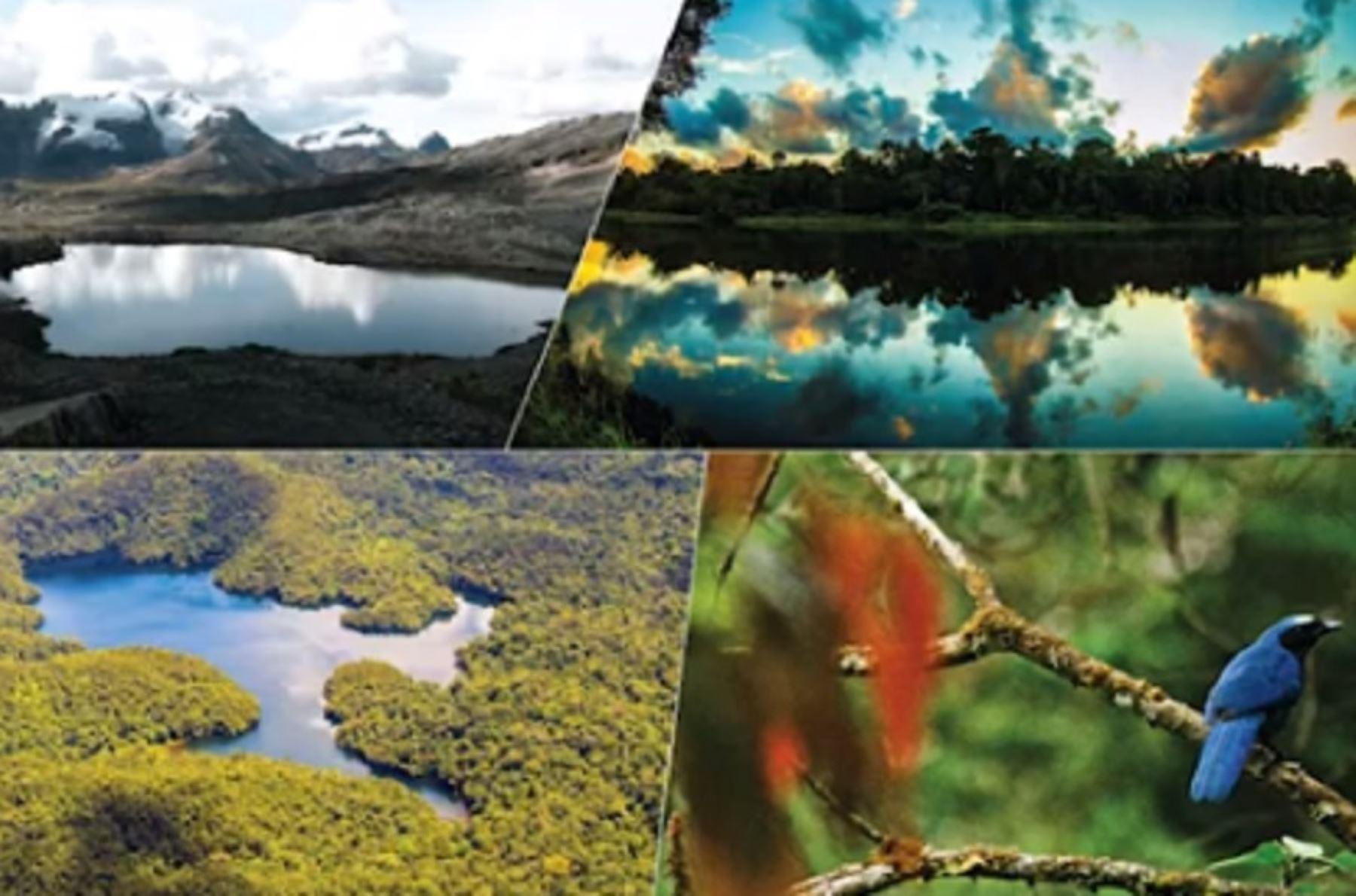 Las Reservas de Biosfera son áreas representativas de ambientes terrestres o acuáticos creados para promover una relación equilibrada entre los seres humanos y la naturaleza. El Perú cuenta con seis Reservas de Biósfera reconocidas por la Unesco.