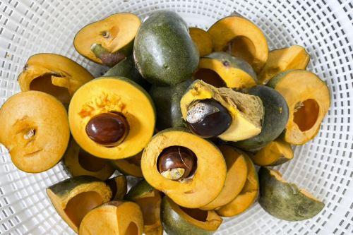 """La lúcuma es uno de los superalimentos peruanos que concita creciente interés en el mundo, que la reconoce como """"oro de los incas"""" por sus notables propiedades nutricionales y versatilidad de consumo, sobre todo en la gastronomía. ANDINA/Difusión"""