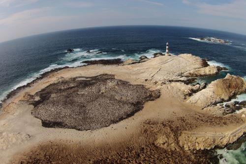 Cuatro áreas marino-costeras albergan una biodiversidad de más de 1,500 especies identificadas, señala el Sernanp. Foto: ANDINA/Sernanp