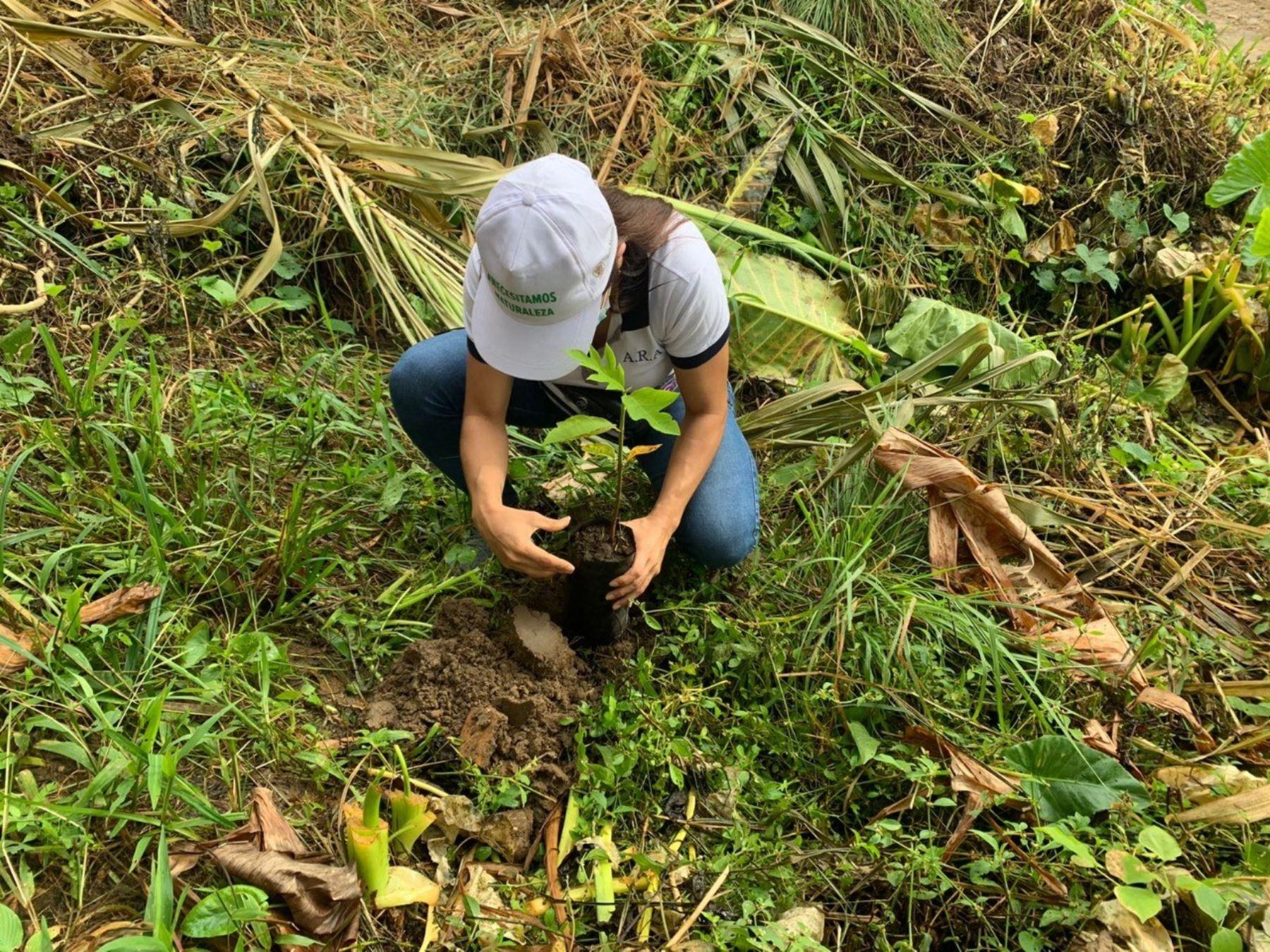 San Martín: Gobierno regional realiza campaña de reforestación con 7 mil plantones