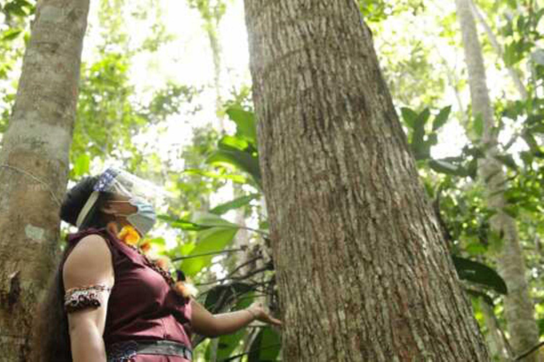 El emprendimiento de las nuwas (mujer en lengua awajún) tiene como propósito promover las costumbres ancestrales de la comunidad indígena. Foto: ANDINA/Goresam