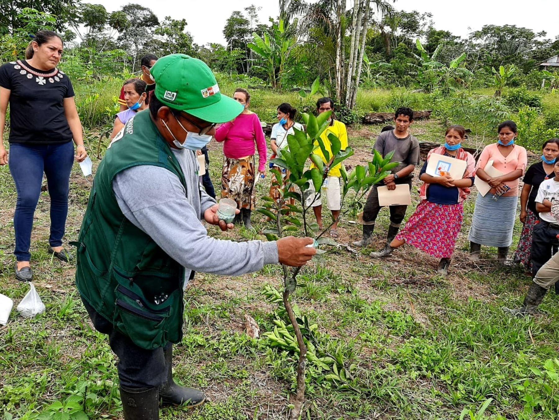 El INIA destacó la aprobación de la Ley de Extensión Agraria y afirmó que esta norma ayudará a incrementar la producción de la agricultura familiar. Foto:  ANDINA/difusión.