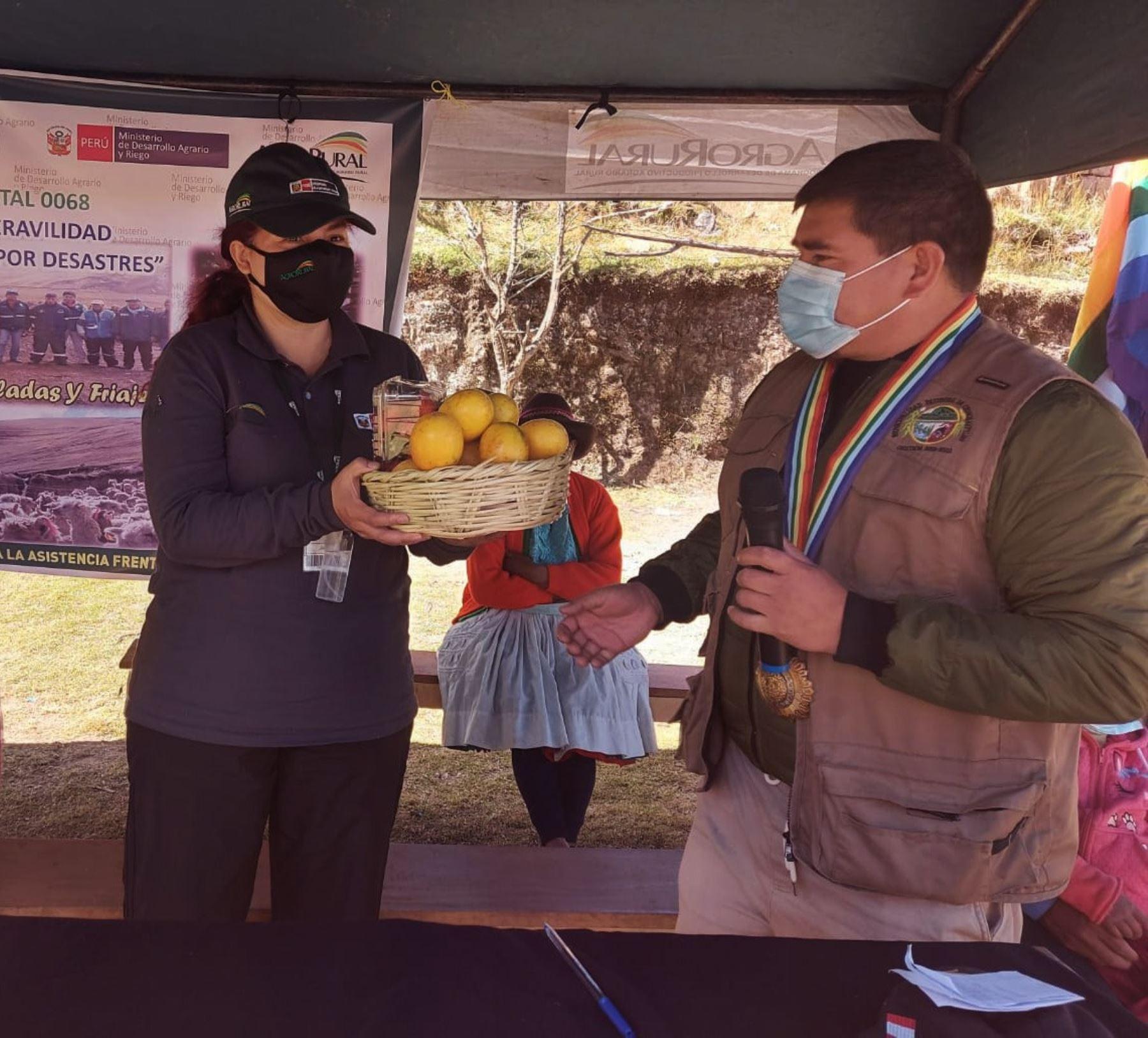 Cusco: Midagri entrega kits para proteger 212 mil cabezas de ganado de las heladas